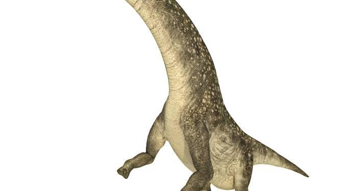 Paleontologen ontdekken fossielen van mogelijks grootste dier ooit