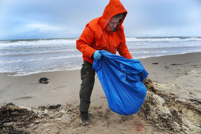 Jaap van der Hiele van Reddingsteam Zeedieren ruimt een aangespoelde zeehond op bij Breezand. Ook dit weekeind spoelde er weer een karkas aan.