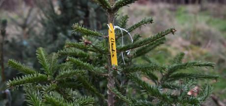 Last onder dwangsom na 'enorme illegale handel in kerstbomen' in Tubbergen