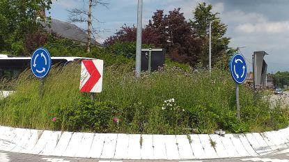 ETA+ klaagt over distels op rondpunt in Grootlo