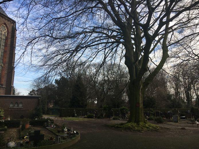 Natuurlijke begraafplaats bij Trudokerk Eindhoven