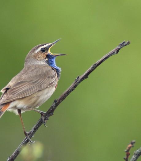 Jaarlijks rapport Engbertsdijksvenen: aantal watervogels slinkt