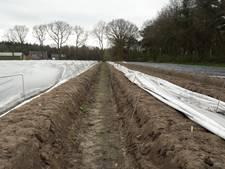 Hoge temperatuur: eerste asperges uit de koude grond in Etten-Leur