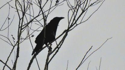 Vogelspotters proberen zoveel mogelijk vogels te spotten in zuidelijk Dijlebekken