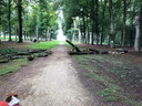 De boomtop van een beuk bij Park Broekhuizen is vorige week vrijdag naar beneden gevallen.
