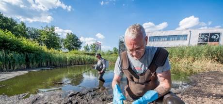 Karpers in Enschedese vijver laten zich niet zomaar redden