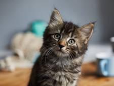 1.600 euro boete voor Ronsenaar (21) die kitten wurgde