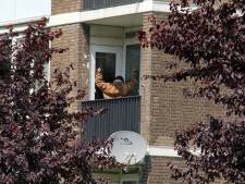 Hof oordeelt: Schiedamse messenzwaaier terecht neergeschoten door speciale eenheid politie