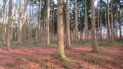 """Natuur en Bos kapt 2.500 bomen in Ryckeveld: """"Een schande"""", vinden tegenstanders"""
