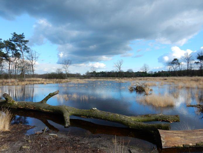 De Brobbelbies in natuurgebied de Maashorst bij Uden.