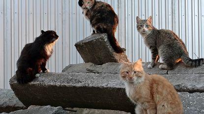 Gezocht: opvanggezinnen voor zwerfkatten in natuurgebied D'Heye