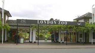 Londen Zoo