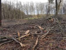 Schaarsbergen treurt om massale bomenkap: 'Het is een grote ellende in het bos'