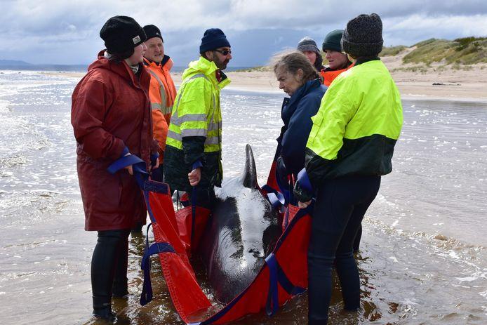 Reddingswerkers proberen een walvis weer in dieper water te leiden.