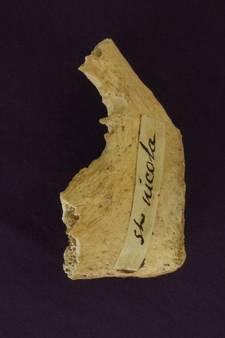 Onderzoek Oxford: oude botten uit Italië zijn mogelijk van Sinterklaas