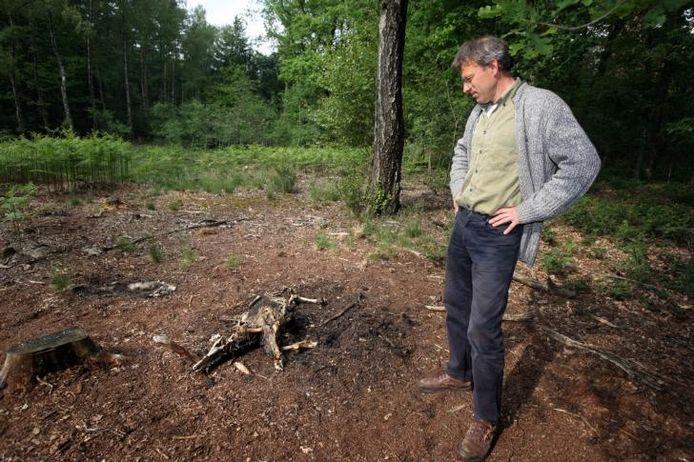 Wouter Helmer bij de overblijfselen van een wild zwijn. foto Gerard Verschooten