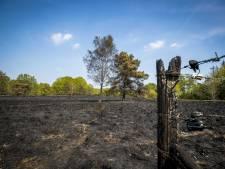 Herstel bossen in natuurgebied De Meinweg na grote brand