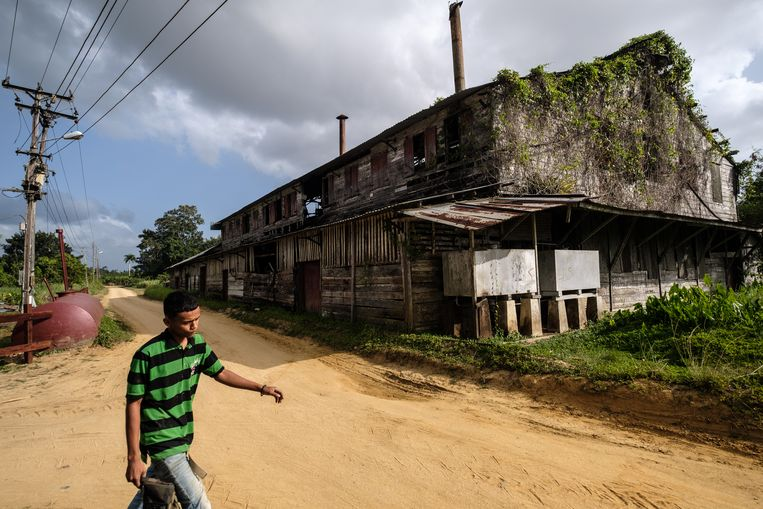 Dezelfde plantage in 2019.  Beeld Rowin Ubink