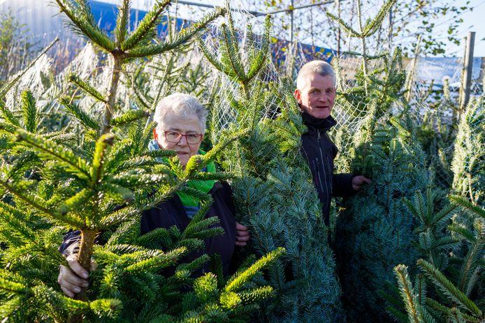 """In Genemuiden verkoopt Johan van Dijk ieder jaar zo'n driehonderd kerstbomen. ,,Nog even pieken zo aan het eind van het jaar."""""""