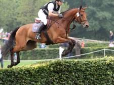 Ooit geveild in Boekelo, nu eventingpaard van het jaar