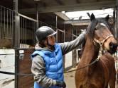 Tweede kans voor verwilderde pony Coco
