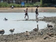 Blauwalg bezorgt Asterdplas in Breda negatief zwemadvies