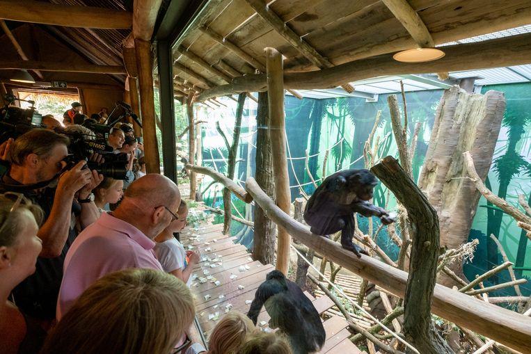Een van de verschillende ruimtes van het nieuwe bonoboverblijf.