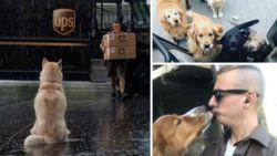 Blijkt dat er een heerlijke Facebookgroep bestaat van UPS-pakjesbezorgers en de honden die ze ontmoeten op hun route