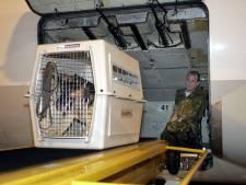 Bange hond ontsnapt en opent vrachtluik van passagierstoestel