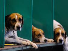 Animal Rights houdt demonstratie in Den Bosch