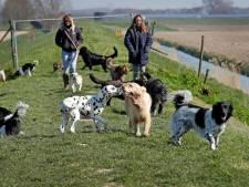 Hondenuitlaters krijgen flinke klap door corona