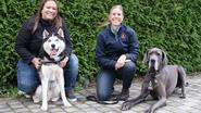 Nieuw hondenspeelplein tegen voorjaar 2018 een feit