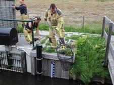 Brandweermannen vliegen pluizige eendenkuikens te hulp in Monster