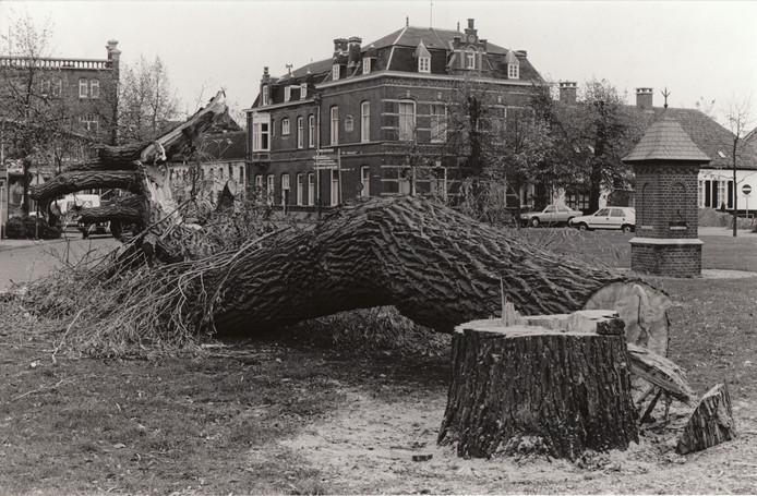 Omgezaagde wilg op de Markt in Waalre, 5 november 1986.