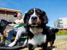 Hond van Wilma uit Apeldoorn ontvoerd tijdens het uitlaten: 'Opeens sprongen er twee mannen uit het busje'