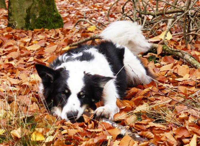 Heerlijk wandelen met de honden rond het vliegveld te Nistelrode en genieten van de herfstkleuren.