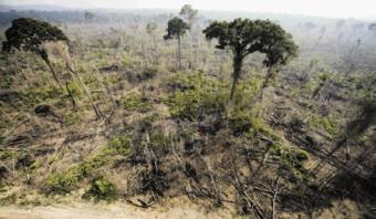 'Belastingparadijzen spelen cruciale rol in ontbossing en illegale visserij'