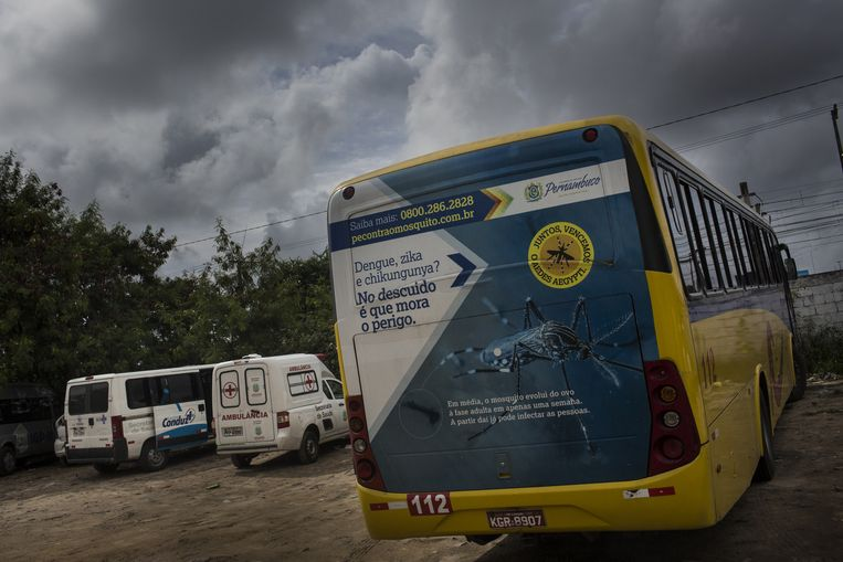 De anti-zika bus Beeld Rafael Fabres