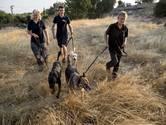 Speurhonden moeten wachten  op Turkse politie in zaak Joey
