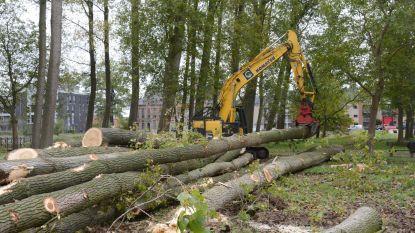 Voorlopig nog geen heraanplanting van bomen in Molenbeekvallei