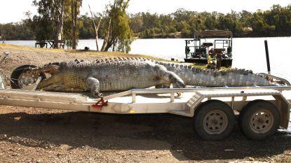 Australiërs bang voor wraak van krokodillen