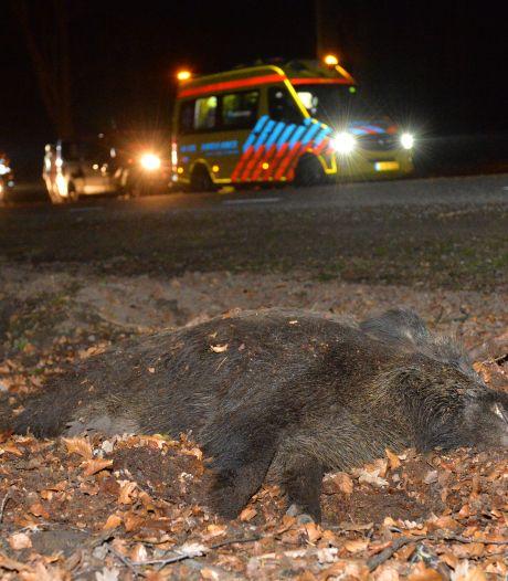 Jagers willen nieuwe vraag in rij-examen: Wat móet je doen na aanrijding met wild?