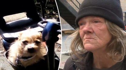 """""""Hij was mijn alles"""": voorbijganger stampt blaffend hondje dood"""