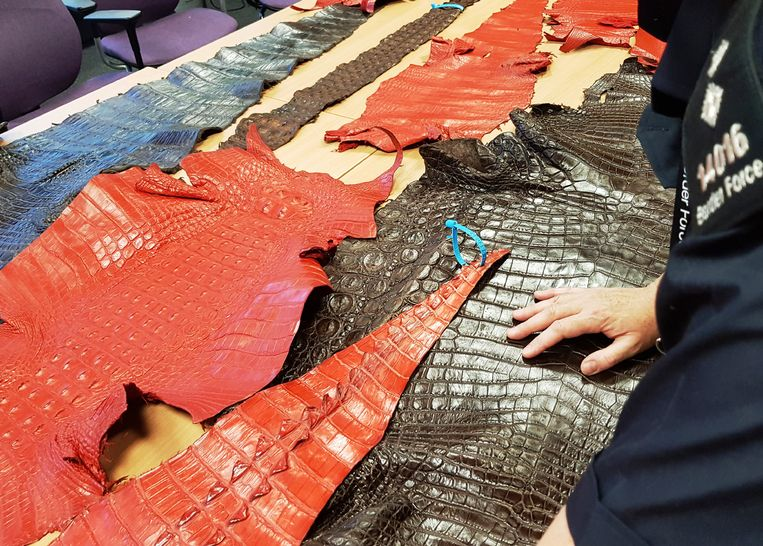 Krokodillenhuid ontdekt in Engeland.