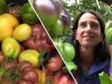 Jolanda teelt tomaten met een tintje: 'Smaakvol en gezonder'