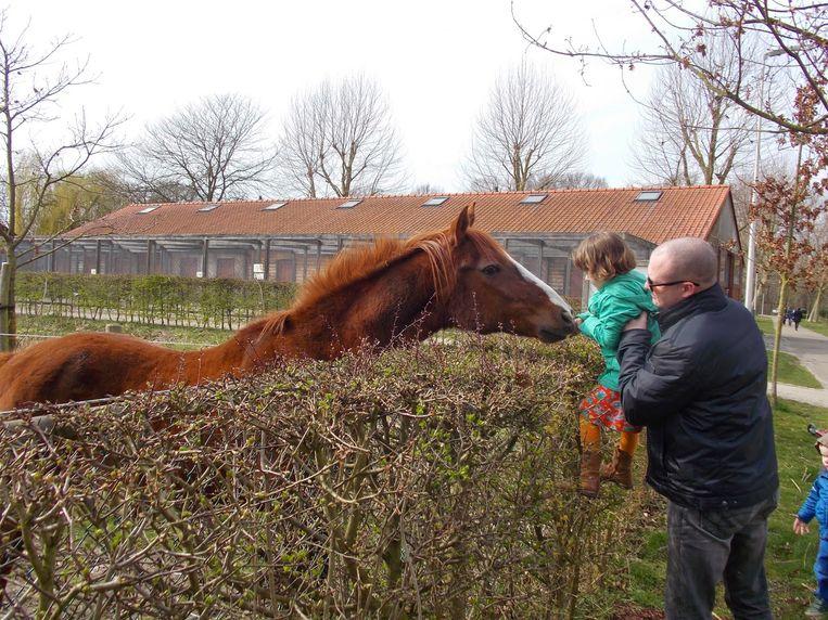 Dienst dierenwelzijn gaf advies voor de verzorging van de oude paarden