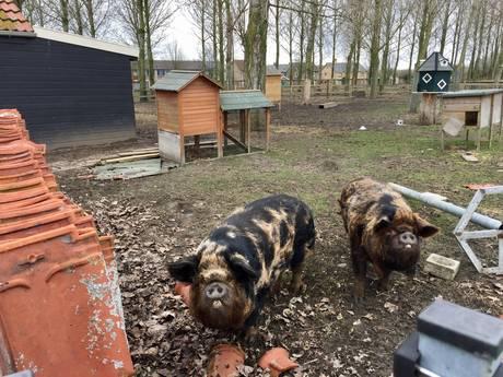 Bebbe en Bobbe moeten weg: kinderboerderij Hansweert is ter ziele