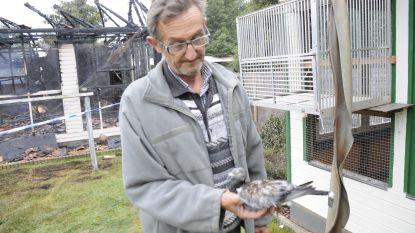 Voor tienduizenden euro's aan duiven gestorven bij brand in duiventil