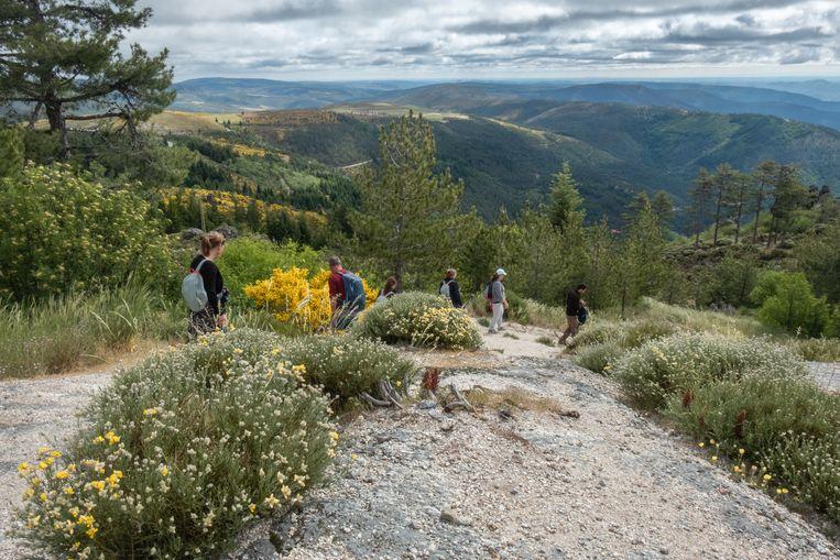Oranje korstmos ligt als een zacht tapijt op het grijze graniet waarop we lopen.  Beeld Roos Haverman