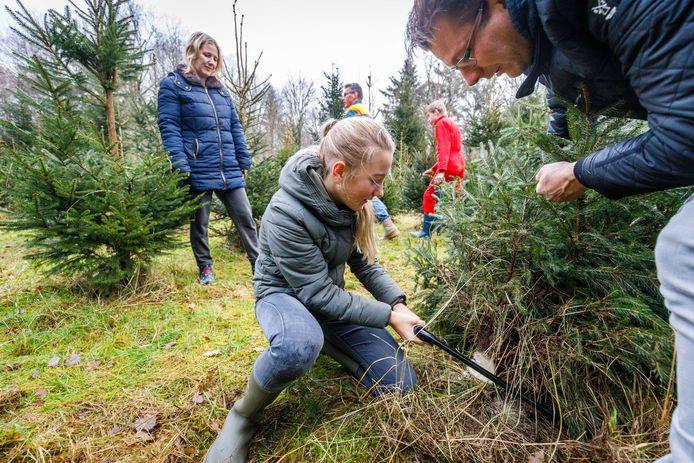 Myrthe Huisman (12) uit Dalfsen zaagt een boom om. Het gezin komt al een paar jaar in Bant een boom zagen. Dat vinden ze zo gezellig.